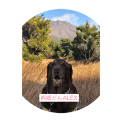 ALEXと挨拶1