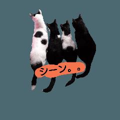 4兄妹猫達の日常