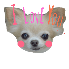airly's dog komomo