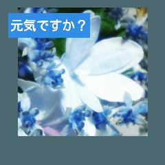 [LINEスタンプ] 紫陽花と日常の挨拶 (1)