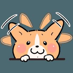コーギー犬(◎)