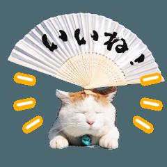 のせ猫Ver.2