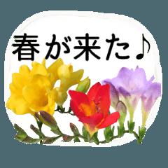 暮らしに花を♪フリージア