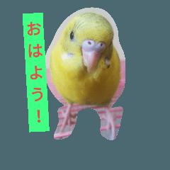 のりのりフクちゃん
