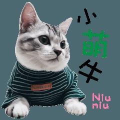 Little lovely Niuniu