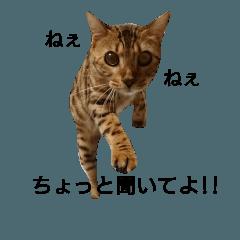 ♡実写猫はなちゃんの日常会話①♡