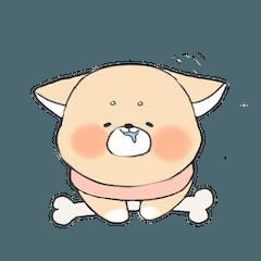 Fat Fat Shiba