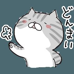ゆるーい猫のよく使うスタンプ